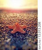 Купить «Starfish on the summer beach», фото № 13013208, снято 19 марта 2019 г. (c) PantherMedia / Фотобанк Лори