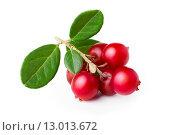 Купить «Wild cowberry (foxberry, lingonberry) with its leaves. Studio shot, large depth of field,retouched», фото № 13013672, снято 17 июля 2019 г. (c) PantherMedia / Фотобанк Лори