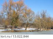 Купить «Весенний пейзаж с деревьями у реки», эксклюзивное фото № 13022844, снято 14 марта 2015 г. (c) Елена Коромыслова / Фотобанк Лори