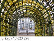 Осенний Санкт-Петербург. Безлюдный Летний сад. Берсо, эксклюзивное фото № 13023296, снято 7 ноября 2015 г. (c) Александр Алексеев / Фотобанк Лори