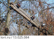 Старый поваленный столб линии электропередачи. Стоковое фото, фотограф Грищенко Юрий / Фотобанк Лори