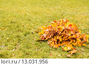 Купить «heap of fallen maple leaves on grass», фото № 13031956, снято 10 октября 2015 г. (c) Syda Productions / Фотобанк Лори