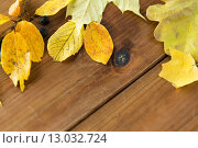 Купить «close up of many different fallen autumn leaves», фото № 13032724, снято 19 октября 2015 г. (c) Syda Productions / Фотобанк Лори