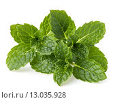 Купить «Fresh mint herb leaves isolated on white background cutout», фото № 13035928, снято 14 января 2015 г. (c) Natalja Stotika / Фотобанк Лори