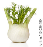 Купить «Fresh fennel bulb isolated on white background close up», фото № 13036480, снято 9 февраля 2015 г. (c) Natalja Stotika / Фотобанк Лори