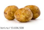 Купить «new potato tuber isolated on white background cutout», фото № 13036508, снято 5 августа 2015 г. (c) Natalja Stotika / Фотобанк Лори