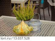 Купить «Осенняя композиция с декоративной тыквой на столике уличного кафе», эксклюзивное фото № 13037528, снято 6 ноября 2015 г. (c) Svet / Фотобанк Лори