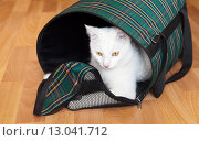 Белый кот в дорожной сумке ждет выхода на прогулку. Стоковое фото, фотограф Виктория Катьянова / Фотобанк Лори