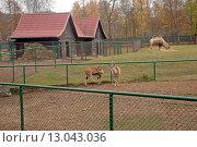 Купить «Животные в зоопарке», эксклюзивное фото № 13043036, снято 5 ноября 2015 г. (c) Svet / Фотобанк Лори