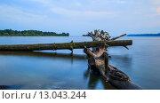 Деревья в воде. Стоковое фото, фотограф Александр Корчагин / Фотобанк Лори