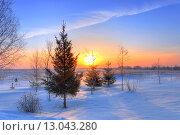 Лес на рассвете в морозное зимнее утро. Стоковое фото, фотограф Александр Корчагин / Фотобанк Лори