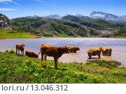 Купить «mountains landscape with lake and cows», фото № 13046312, снято 18 июня 2019 г. (c) Яков Филимонов / Фотобанк Лори