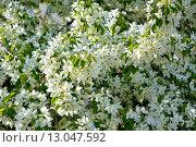 Яблоневый цвет. Стоковое фото, фотограф Рута Применко / Фотобанк Лори