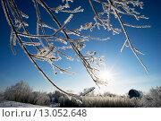 Купить «Ветки в инее и яркое солнце», фото № 13052648, снято 11 ноября 2015 г. (c) Алексей Маринченко / Фотобанк Лори