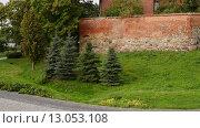 Купить «Teutonic castle in Sztum, Poland», видеоролик № 13053108, снято 15 октября 2015 г. (c) BestPhotoStudio / Фотобанк Лори