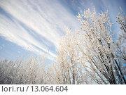 Купить «Красивое небо и ветви деревьев в снегу», фото № 13064604, снято 12 ноября 2015 г. (c) Алексей Маринченко / Фотобанк Лори