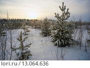 Купить «Зимний вечерний пейзаж с соснами», фото № 13064636, снято 13 ноября 2015 г. (c) Алексей Маринченко / Фотобанк Лори