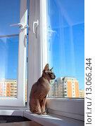 Купить «Кошка на подоконнике сидит и смотрит в окно», эксклюзивное фото № 13066244, снято 20 августа 2015 г. (c) Яна Королёва / Фотобанк Лори