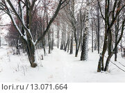 Купить «После снегопада», фото № 13071664, снято 15 ноября 2015 г. (c) Валерий Боярский / Фотобанк Лори