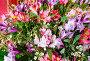 Big multicolor alstroemeria flowers bouquet, фото № 13072216, снято 24 марта 2014 г. (c) Юрий Брыкайло / Фотобанк Лори