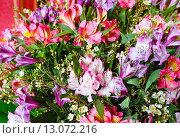 Купить «Big multicolor alstroemeria flowers bouquet», фото № 13072216, снято 24 марта 2014 г. (c) Юрий Брыкайло / Фотобанк Лори