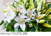 Купить «Amaryllis flowers bouquet», фото № 13072280, снято 24 марта 2014 г. (c) Юрий Брыкайло / Фотобанк Лори