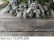 Купить «Заснеженные еловые ветки и шишки на деревянном фоне», фото № 13079200, снято 19 ноября 2017 г. (c) Афанасьева Ольга / Фотобанк Лори