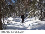 Купить «Зимний лес в снегу и человек идущий по тропе», фото № 13083284, снято 10 марта 2013 г. (c) Юрий Карачев / Фотобанк Лори