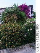 Красивый сад возле дома (2015 год). Стоковое фото, фотограф Dmitrii Shafranskii / Фотобанк Лори