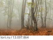 Купить «Туман в осеннем лесу с опавшими листьями. Демерджи. Крым», фото № 13097864, снято 22 октября 2015 г. (c) Оксана Гильман / Фотобанк Лори