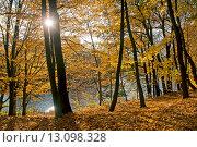 Купить «Осеннее солнце среди деревьев», эксклюзивное фото № 13098328, снято 29 октября 2015 г. (c) Svet / Фотобанк Лори