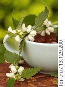 Купить «White dead nettle (Lamium album)», фото № 13129200, снято 21 сентября 2018 г. (c) age Fotostock / Фотобанк Лори