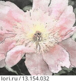 Купить «art floral vintage sepia watercolor background with light pink peonies», фото № 13154032, снято 8 июня 2013 г. (c) Ingram Publishing / Фотобанк Лори