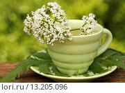 Купить «Valerian infusion Valeriana officinalis», фото № 13205096, снято 1 июня 2009 г. (c) age Fotostock / Фотобанк Лори