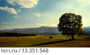 Купить «Cades Cove panoramic vista and giant Oak tree. Cades Cove is an isolated valley located in the East Tennessee section of Great Smoky Mountains National...», фото № 13351568, снято 5 июля 2020 г. (c) age Fotostock / Фотобанк Лори