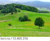 Купить «Sammer hilly meadow», фото № 13405316, снято 23 августа 2014 г. (c) Юрий Брыкайло / Фотобанк Лори
