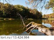Купить «Осенний пейзаж с прудом», эксклюзивное фото № 13424984, снято 23 сентября 2015 г. (c) Игорь Низов / Фотобанк Лори