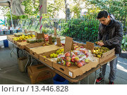 Купить «New York City, NY, USA, Male Clerk Working at Food Stalls, Fresh, Local Fruit, Farmer´s Market, in Greenwich Village, ´Abingdon Square´», фото № 13446828, снято 20 ноября 2018 г. (c) age Fotostock / Фотобанк Лори
