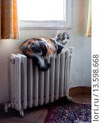 Cat on radiator Central Europe. Стоковое фото, фотограф Paco Sinisterra / age Fotostock / Фотобанк Лори