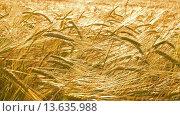 Купить «Колосья золотистой пшеницы», видеоролик № 13635988, снято 24 ноября 2015 г. (c) Михаил Коханчиков / Фотобанк Лори