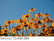 Купить «Korbblüten», фото № 13645084, снято 7 июля 2020 г. (c) age Fotostock / Фотобанк Лори