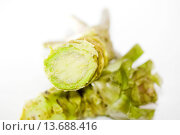 Купить «WASABIA JAPONICA (WASABI)», фото № 13688416, снято 23 января 2020 г. (c) age Fotostock / Фотобанк Лори