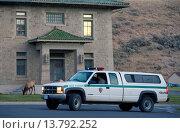 Купить «wapiti, elk (Cervus elaphus canadensis, Cervus canadensis), park ranger keeping an eye on elks grazing in fronz of a house, USA, Wyoming, Yellowstone National Park, Mammoth Hot Springs», фото № 13792252, снято 22 октября 2018 г. (c) age Fotostock / Фотобанк Лори