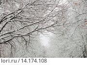 Купить «Заснеженные ветки деревьев», фото № 14174108, снято 30 ноября 2015 г. (c) Инга Макеева / Фотобанк Лори