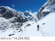 Купить «Trekker walking over Cho La Pass with Lobuche West and East on left side, Solukhumbu District, Nepal, Himalayas, Asia», фото № 14254992, снято 4 июля 2020 г. (c) age Fotostock / Фотобанк Лори