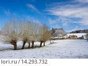 Snow on pollarded Willow trees at Swinbrook in Oxfordshire, England, United Kingdom. Стоковое фото, фотограф Tim Graham / age Fotostock / Фотобанк Лори