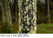 Купить «Moss and lichens on tree, North Island, New Zealand», фото № 14380892, снято 15 ноября 2018 г. (c) age Fotostock / Фотобанк Лори