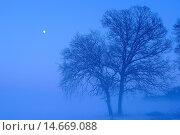 Купить «Oak in winter, Vechta district, Niedersachsen, Germany / Eiche im Winter, Landkreis Vechta, Niedersachsen, Deutschland», фото № 14669088, снято 18 декабря 2010 г. (c) age Fotostock / Фотобанк Лори