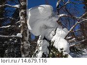 Купить «Зимний лес, солнечный зимний день, снежный сугроб  на березе. Природный парк Таганай», фото № 14679116, снято 10 марта 2013 г. (c) Юрий Карачев / Фотобанк Лори