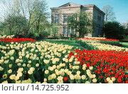 Купить «Lohmann villa and blooming municipal park, Germany, North Rhine-Westphalia, Ruhr Area, Witten», фото № 14725952, снято 20 февраля 2019 г. (c) age Fotostock / Фотобанк Лори